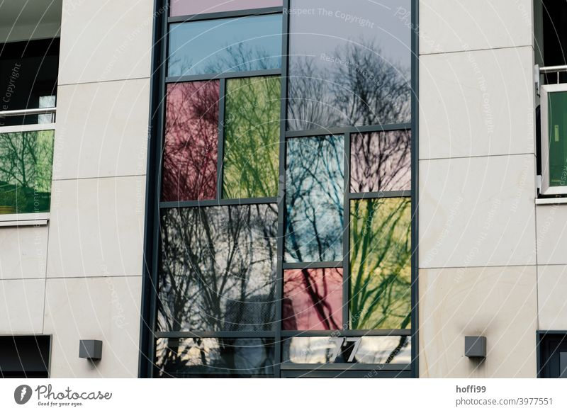tinted windows reflect the bare trees in the dreary, urban facade Window Colored windows colored reflection Architecture Reflection Glass Facade