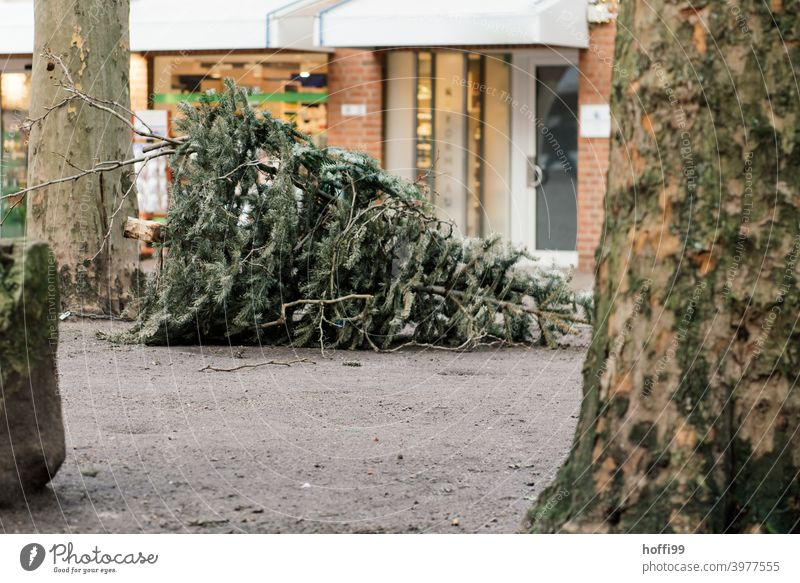 the disused fir tree is waiting to be disposed of Christmas tree Tree Loneliness Old Fir tree Holiday season sad Recycling recycle Jawbone Sidewalk Needle