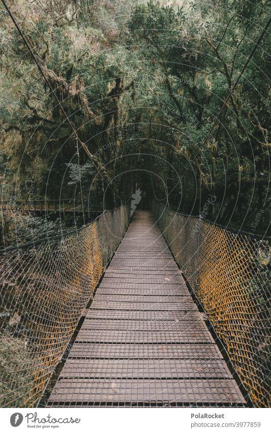 #AS# Suspension bridge for adventurers Wood Virgin forest jungle giants Fern grasses Moss Adventure Nature Exterior shot Plant Deserted New Zealand ferns