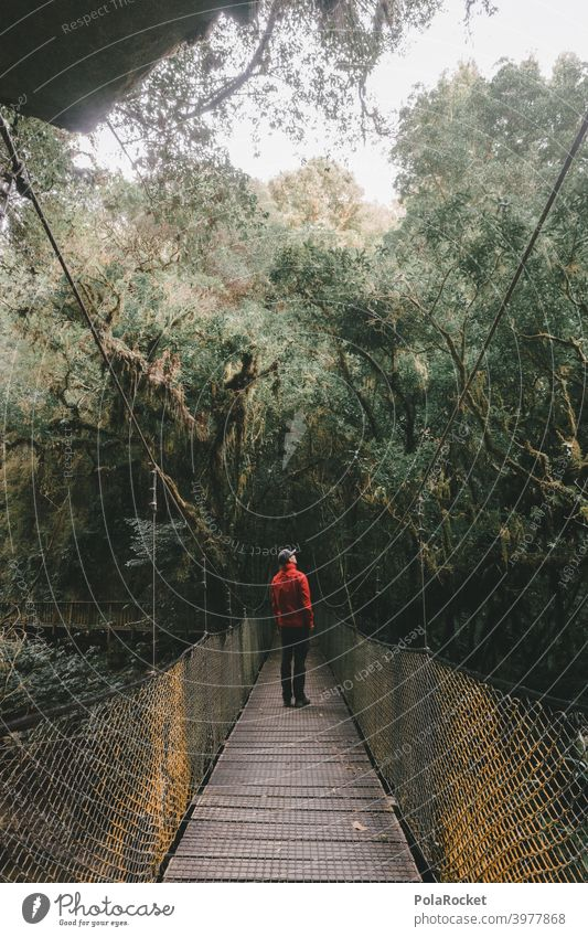 #AS# Suspension bridge for adventurers II Wood Virgin forest jungle giants Fern grasses Moss Adventure Nature Exterior shot Plant New Zealand ferns