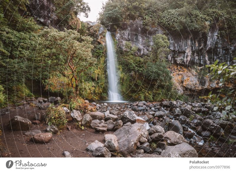 #AS# Dawson Falls II Waterfall Tree Nature Nature reserve Adventure Landscape Exterior shot Deserted Central perspective covert New Zealand Vacation & Travel