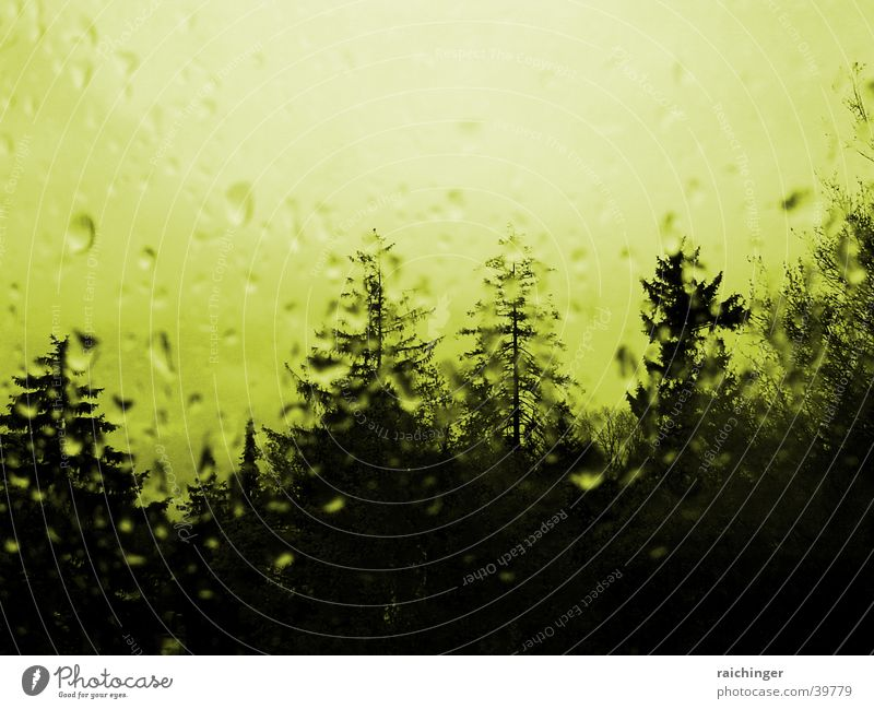 rainy day Tree Window Window pane Drops of water Mystic Rain Glass Distorted Spooky