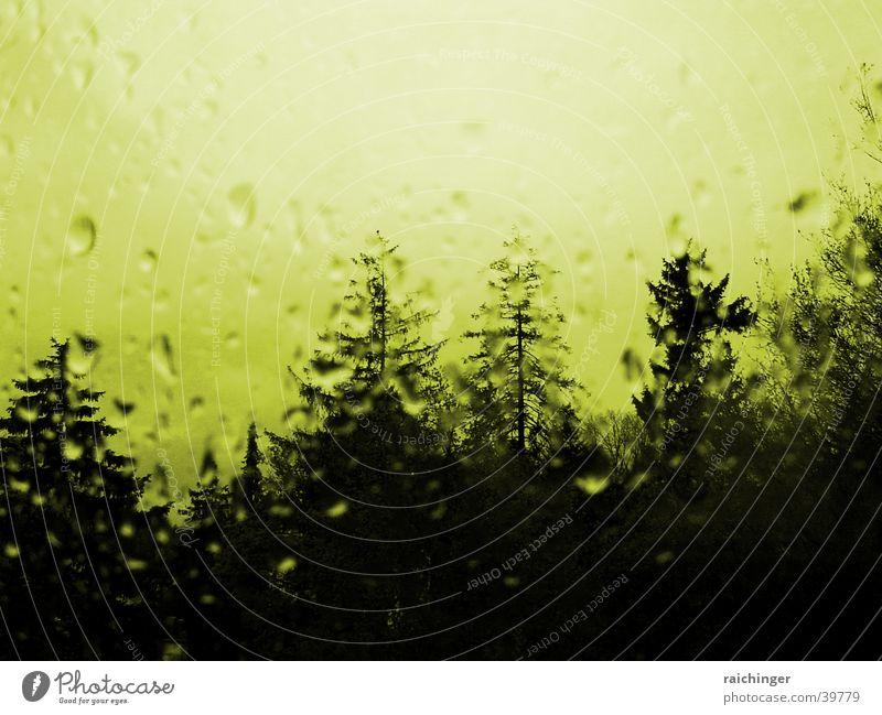 Tree Window Rain Glass Drops of water Window pane Mystic Distorted Spooky