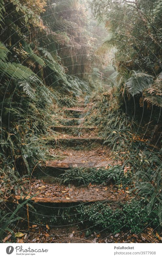 #AS# Stairway to another world rainforest Tropical Forest trees Moss Mystic jungles Fog Adventure Deserted Nature Green Landscape naturally foliage Untouched