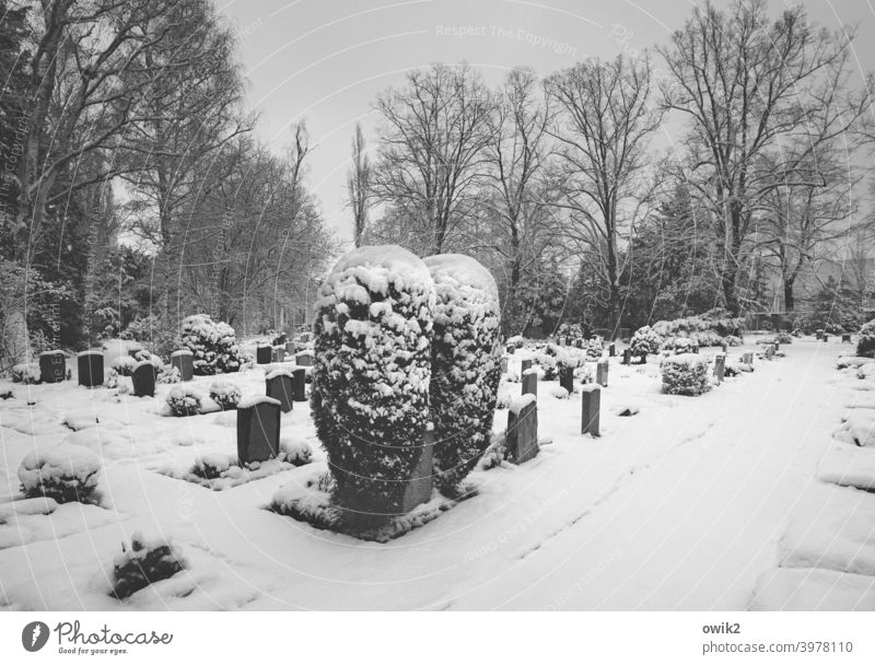silent Graves Grief Death Tost Winter chill Environment Nature Landscape Peaceful Copy Space right Panorama (View) Beautiful weather To console Cemetery Frost