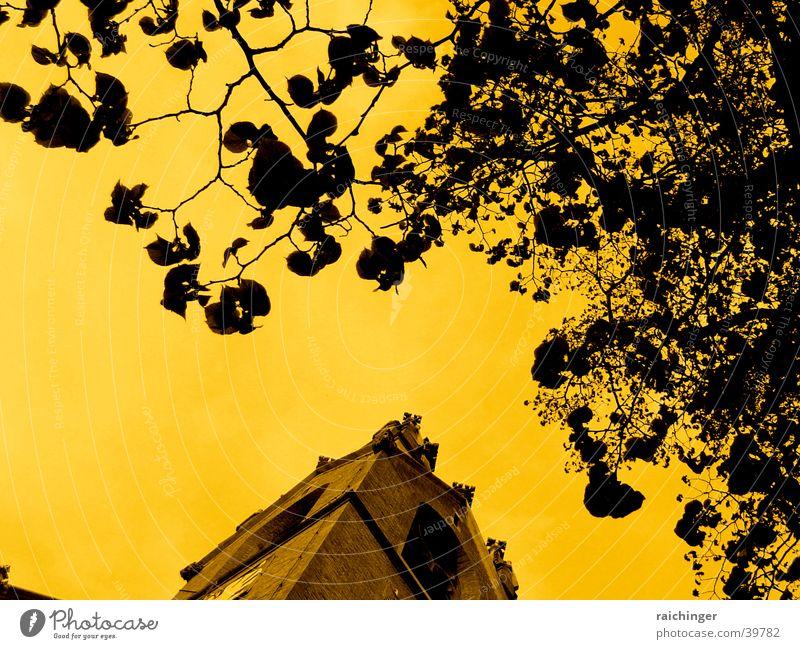 Sky Tree Leaf Tower Branch Twig Dramatic