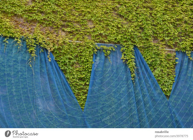 wall design Wall (building) Wall (barrier) Ivy Overgrown Planning slides wrapped shrouded Blue Green background overgrown Nature naturally Growth