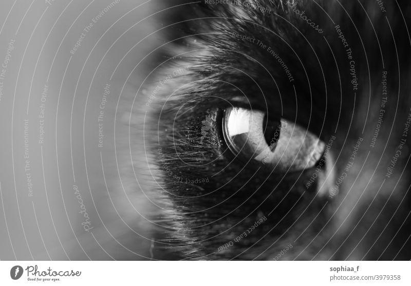 black and white closeup of cat's eye, eye of an black cat watching you cat eye focus close up pupil iris macro eyes soul black and white photo animal beautiful