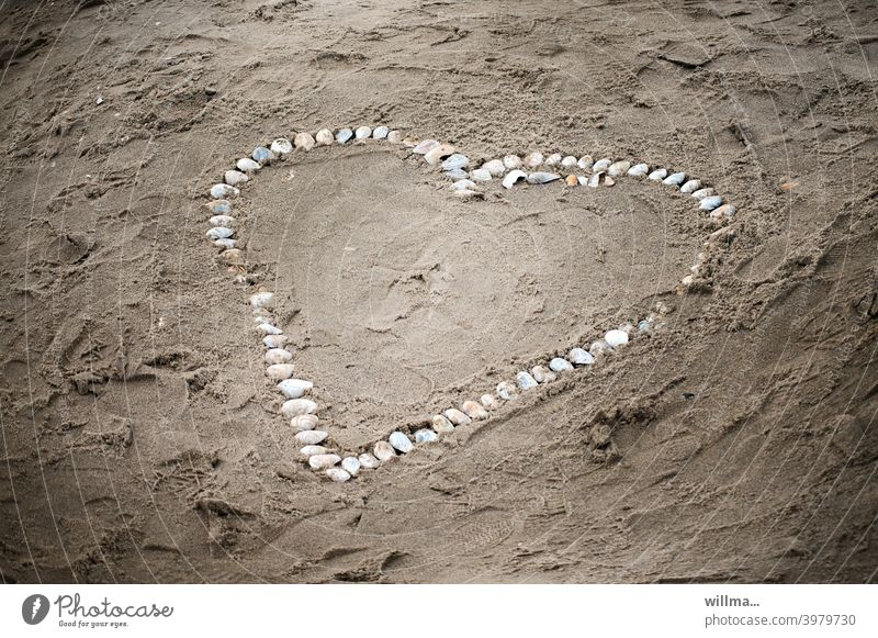 A fuzzy pain made out of merzhuscheln.  :-) Heart seashells Beach symbol Valentine's Day Romance Infatuation Love Mother's Day Sand Heart-shaped Sincere