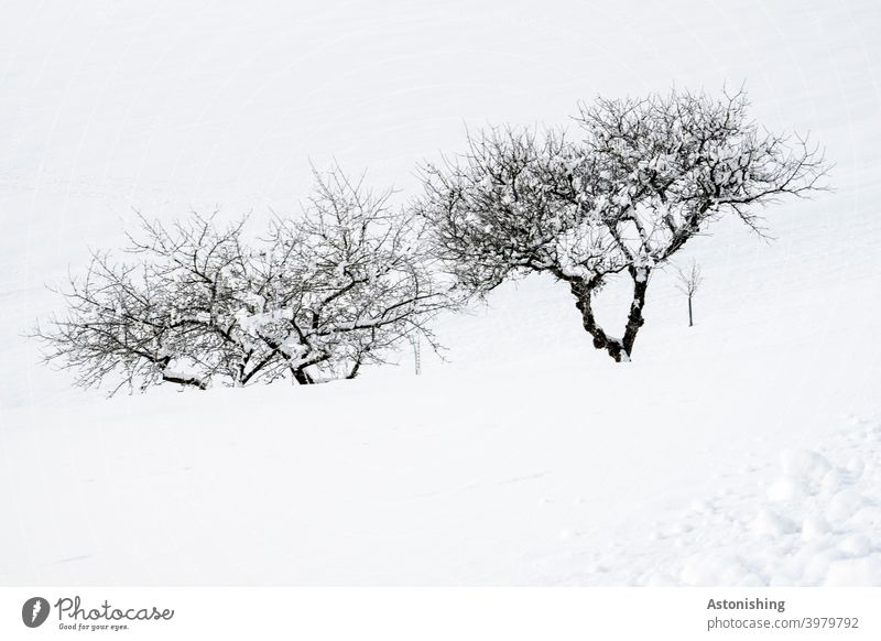 Trees in snow trees Apple tree Snow Winter twigs Tree trunk branches bark Landscape Nature Season White Black Exterior shot Twigs and branches Deserted