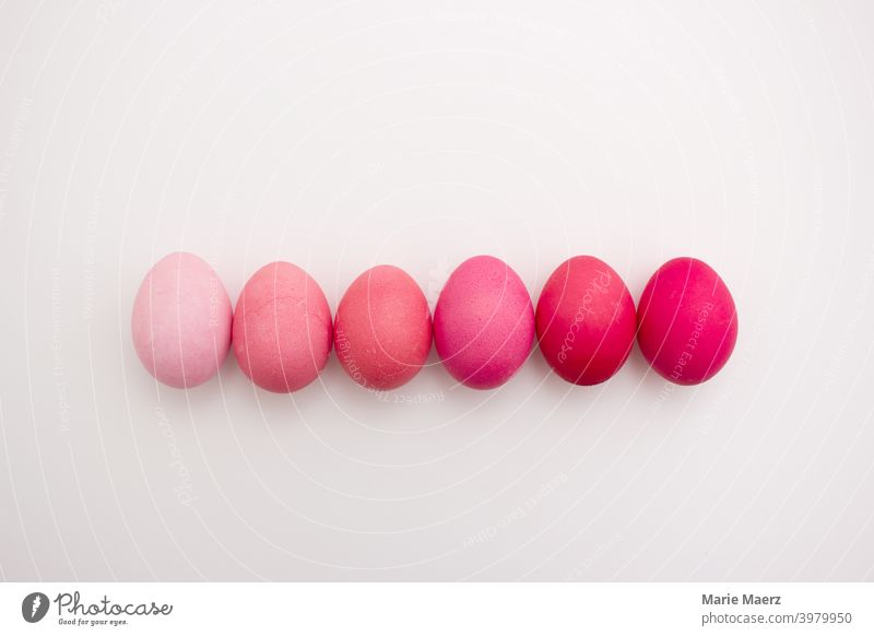 Row of 6 Easter eggs in different shades of pink from pastel to pink on a light background pretty Bright celebration Close-up Collection Colour Copy Space