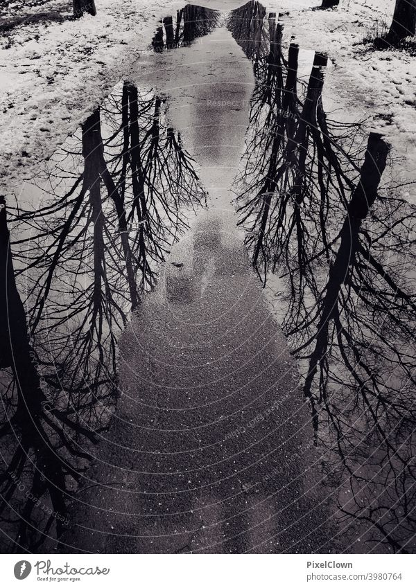 A puddle on a walkway with reflecting trees in it puddle mirroring Reflection Exterior shot Puddle Water Asphalt Rain Tree Weather black and white