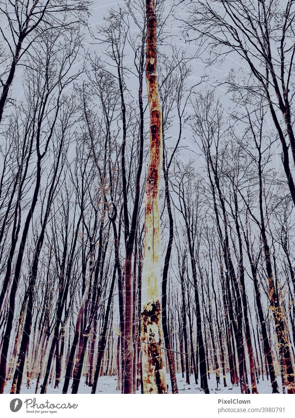 Winter onset in the forest Nature Snow Tree Landscape Ice Sky Cold Snowscape Forest Winter forest Exterior shot Frost White