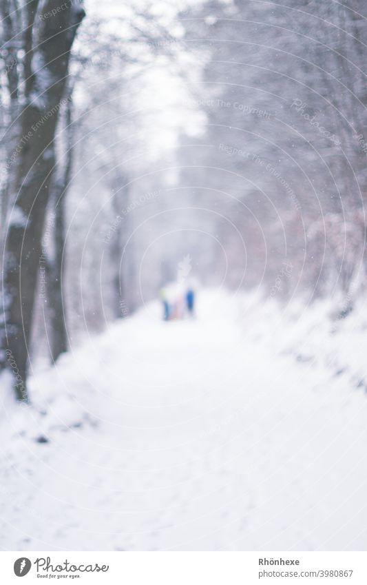 Walk in the snow blurred photographed...like ghosts January Colour photo Shallow depth of field snow-covered Freeze Exterior shot Winter Snow Tree White Nature