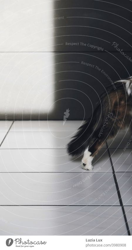 Let me! or the cat, long-haired and mackerel, leaves the picture, the kitchen to the right. To see still a hind leg with white paw and the bushy tail Cat