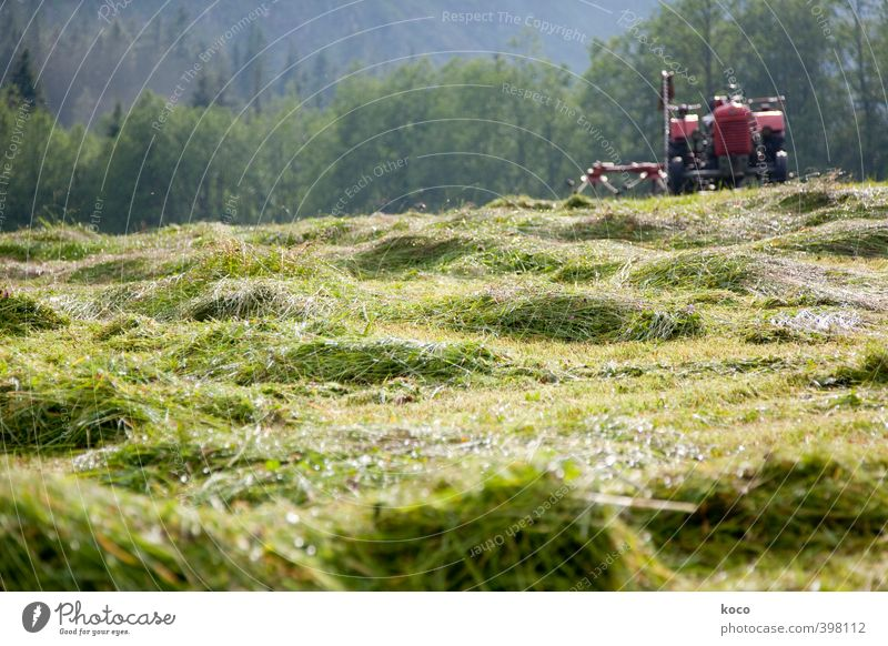make hay Tourism Summer Summer vacation Economy Agriculture Forestry Farm Environment Nature Landscape Beautiful weather Warmth Grass Foliage plant