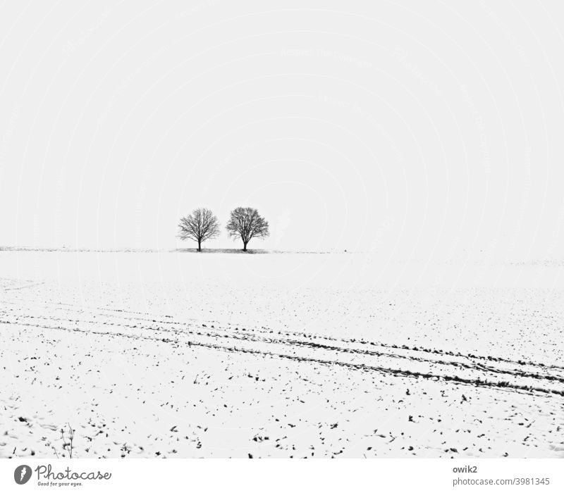 Get off the field! Sparse White Beautiful weather Cold Tree Winter mood Snowscape Far-off places Environment Nature Landscape Sky snowy wide Horizon chill