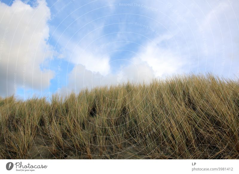 grass in the wind and blue sky with clouds Vacation & Travel Calm Break Relaxation Breeze Coast Wind Grass Beach Dune Beach dune Sit Deserted Exterior shot