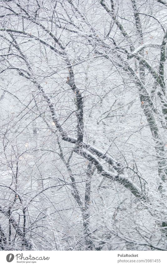 #A0# Winter forest Winter mood Winter's day winter Winter light trees branches Snow blow snow