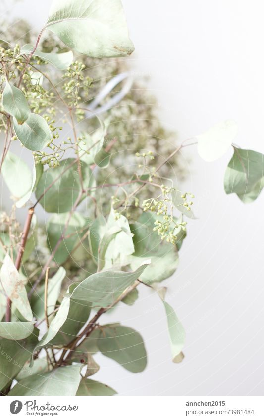 In the front of the picture is a bouquet of dried eucalyptus, in the back you can see a wreath of white baby's breath. Dried flowers Green Wreath White