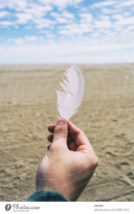 boy fingers holding a white feather of a bird dream harmony moody wellness inspiration solitude tenderness awe faith hope moment oxygen purity smooth human