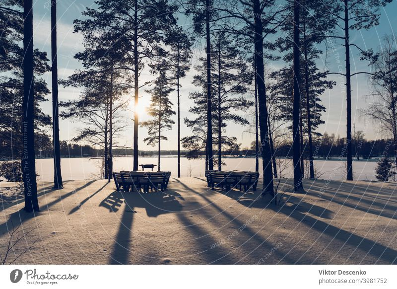 Pine forest by the lake on a sunny winter day europe january fir holiday christmas light reed hike latvia forest lake calm white color fresh silence nobody
