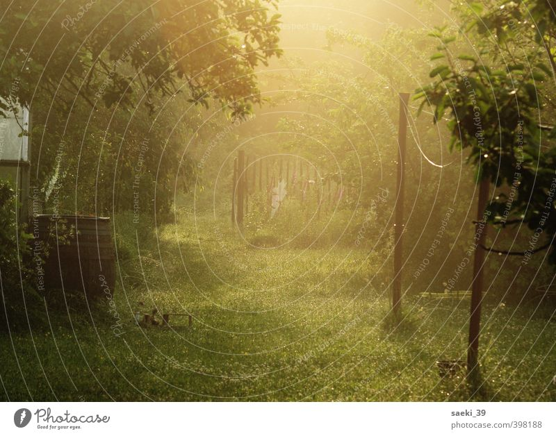 still in dreams Nature Landscape Summer Plant Grass Garden Meadow Esthetic Friendliness Beautiful Brown Green Emotions Moody Contentment Safety (feeling of)