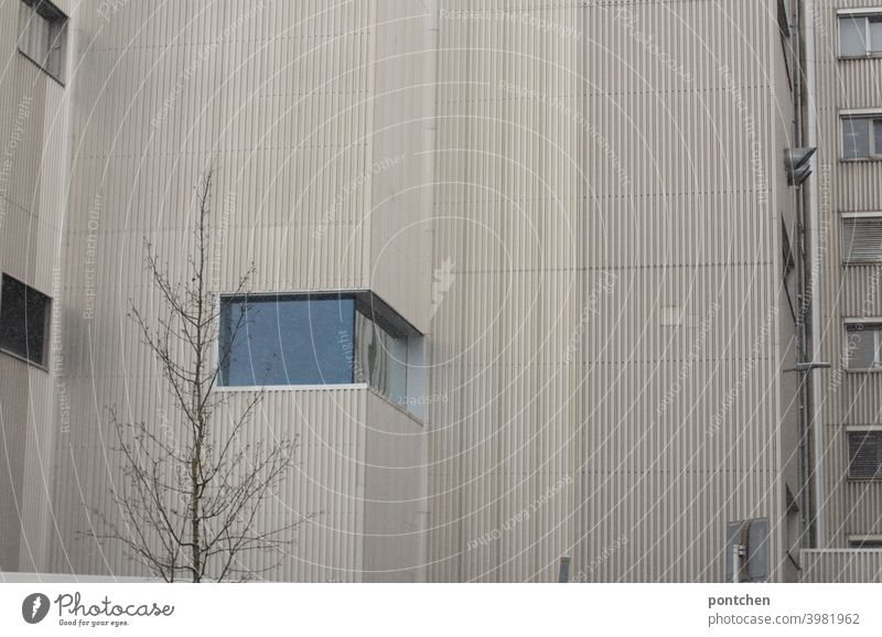 Architecture. A house facade with a bare tree. Tristesse Building Facade dreariness Tree Bleak Window