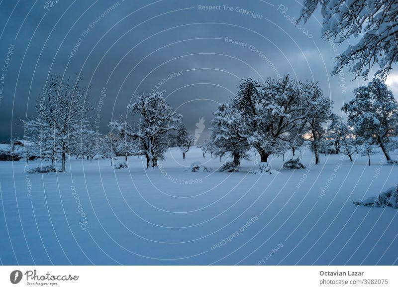 Dark blue moody snow covered winter wonderland scene late evening cloudy day amazing background beautiful beauty branch christmas climate cold december europe