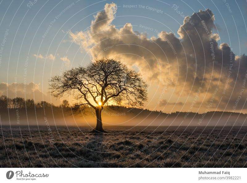 A Beautiful Nature Lone Tree And Clouds Landscape With Sunset Sunlight Sunrise Light Sky Colour photo Back-light Evening Environment Shadow Silhouette Plant