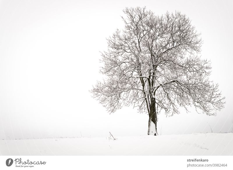 Lonely bare tree on snowy field Tree Snow Winter Field Bleak Cold Exterior shot White Deserted Gray Landscape Nature Colour photo Day Calm Fog Frost Bad weather
