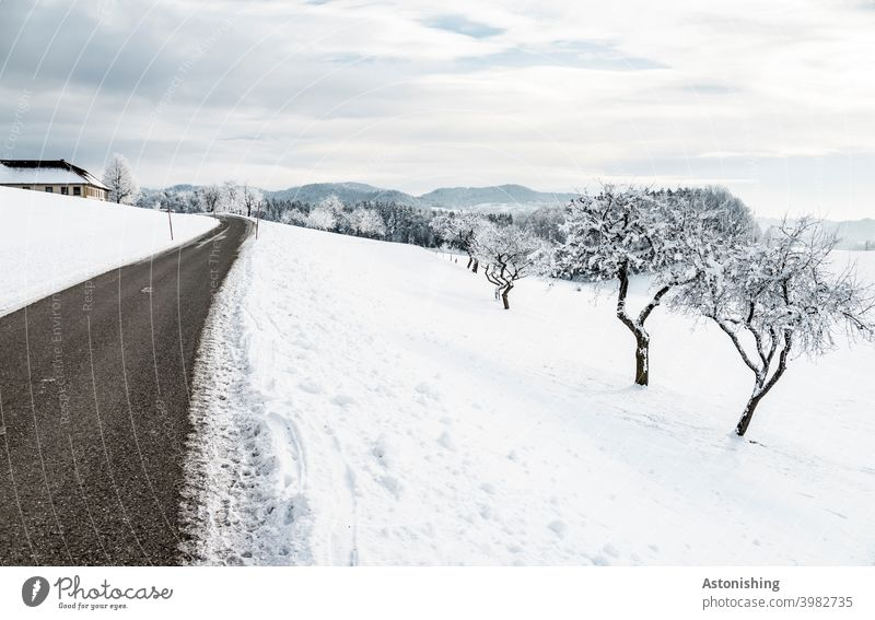 Winter landscape with road and trees winter landscape Street Nature Snow White off Vantage point Horizon Forest Austria mill district trace Environment Weather