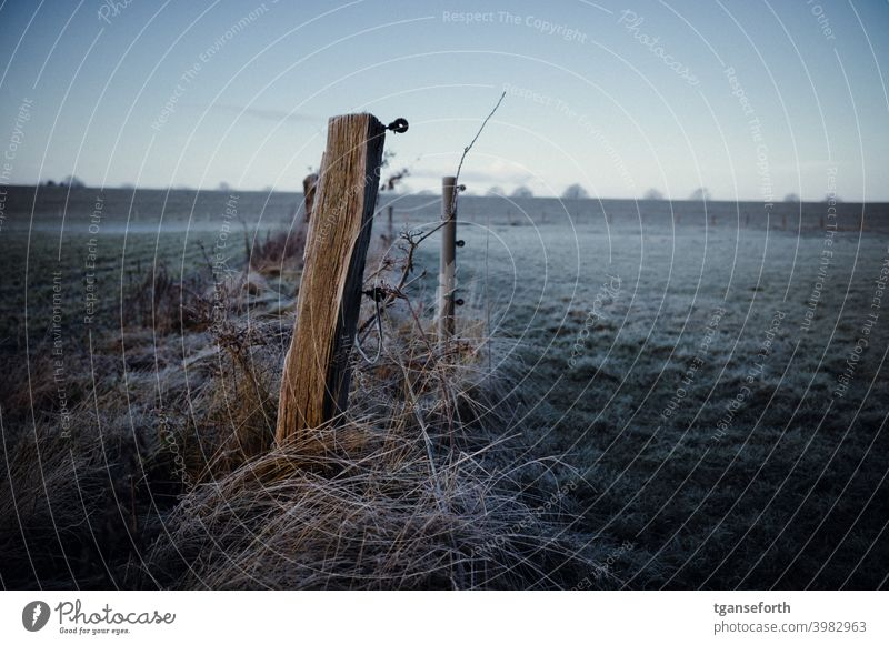 frost Frost Hoar frost Cold Winter Frozen Close-up Deserted Willow tree Fence Exterior shot Fence post Pasture fence Meadow Landscape Freeze Morning