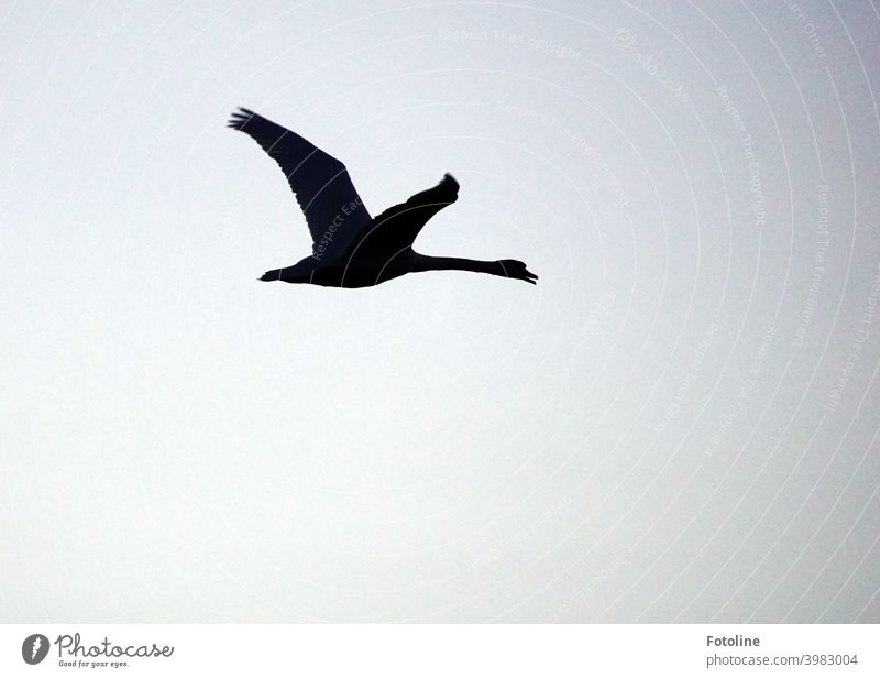 Crane flight against a cloudy, orange sky. There they fly in the sunrise. Sky Flying Bird Nature Exterior shot Wild animal Colour photo Animal Deserted