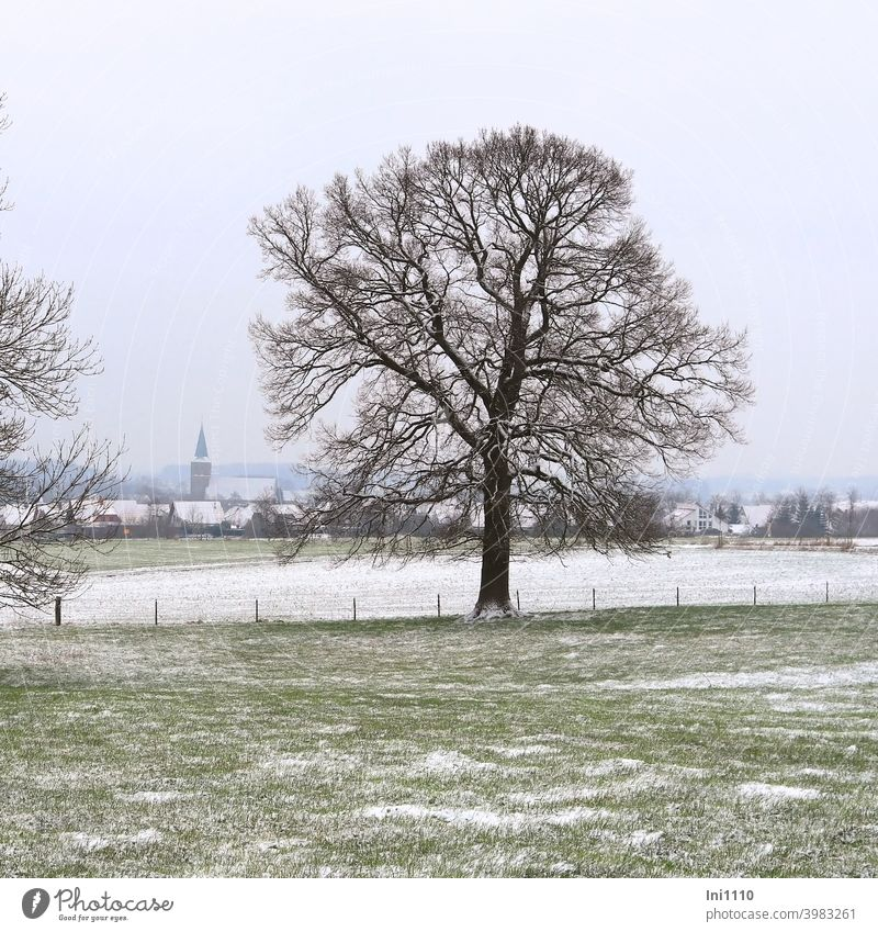 View through two trees over lightly snowed meadows and fields to the church in the village Winter Winter mood Dreary Cold houses Church Village light snowfall