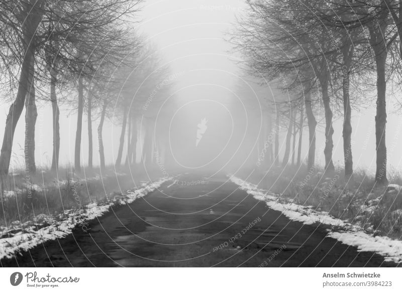 tree lined road in in winter and fog country weather transportation nowhere mystery travel misty background danger condition park horror autumn foggy spooky