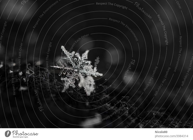 Snowflake on black cap Snowflake on fabric Winter Cold Ice Exterior shot Snowfall Frost Colour photo Delicate Fragile Ice crystal Deserted