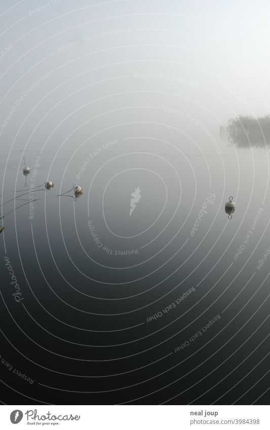 Small buoys on glassy lake in morning fog tranquillity Nature Idyll poetry Moody harmony Lake Water Surface of water reflection smooth early in the morning