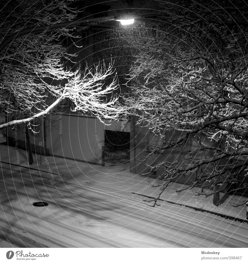 Summersnow Environment Plant Water Winter Bad weather Snow Snowfall Tree Foliage plant To fall Flying Cold Wet Natural Wild Gray Black White Branch Pavement