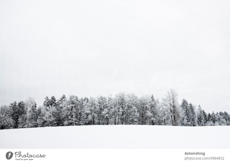 Forest line in winter Winter Austria Colour photo Copy Space bottom silent Calm Loneliness Day Copy Space top Climate Snow layer Seasons Deserted Winter mood
