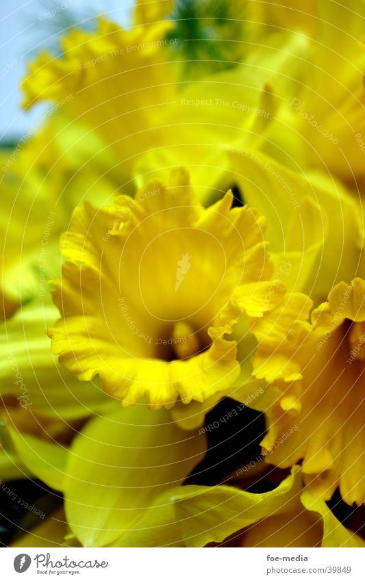 Flower Yellow Blossom Bouquet