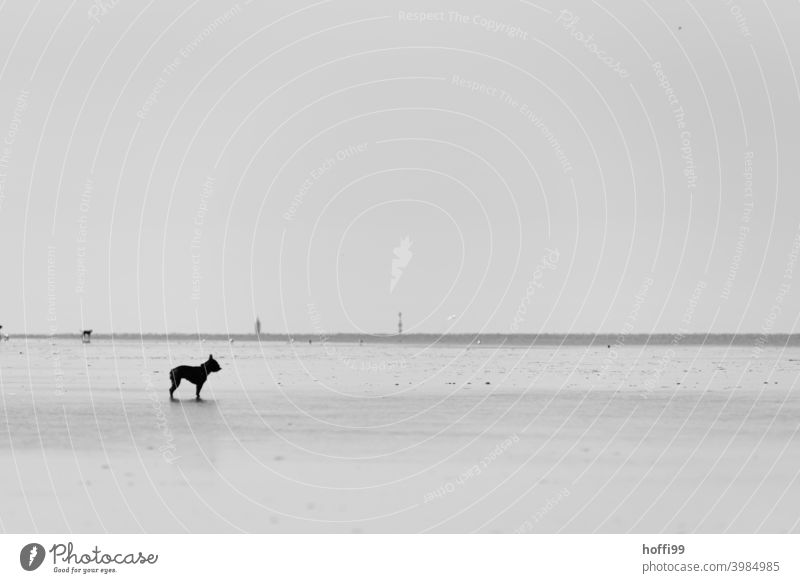 the dog is standing in the mudflats and doesn't know what to do - the tide is coming in soon .... Mud flats Low tide Dog Minimalistic minimalism North Sea Ocean
