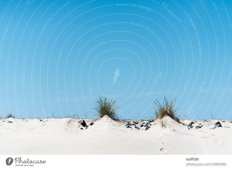 two hills with beach grass coast Beach dune duene silty Sandy beach Summer Vacation & Travel Nature Blue sky North Sea Islands baltrum vacation Minimalistic