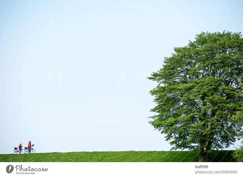 two cyclists with a big tree on a green dike Cycling Cyclist Dike dike top Tree Green green meadow Lifestyle Outdoors Bikers Bicycle Sports travel activity