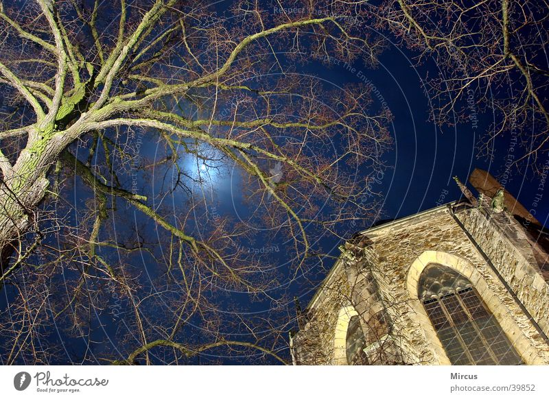 the moon dreams Night Tree House of worship Religion and faith Moon Branch Statue sacral buildings