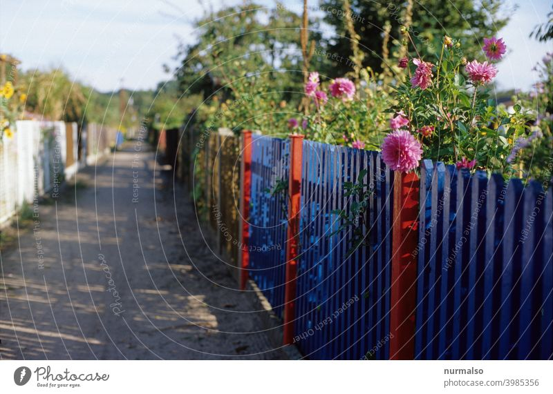 Allotment idyll allotment Fence flowers Summer colors Garden Blue Pink Green Garden plot free time Relaxation Colony Gardenhouse Vegetable Lawn lattice fence
