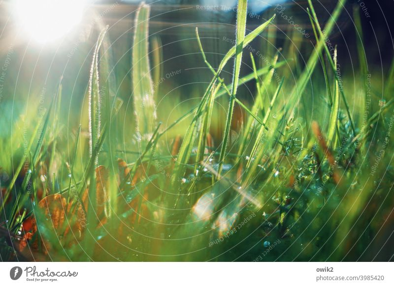 wetland meadow Meadow Grass Detail Deserted Growth Macro (Extreme close-up) Sunlight Worm's-eye view naturally Beautiful weather Mysterious Idyll Summer