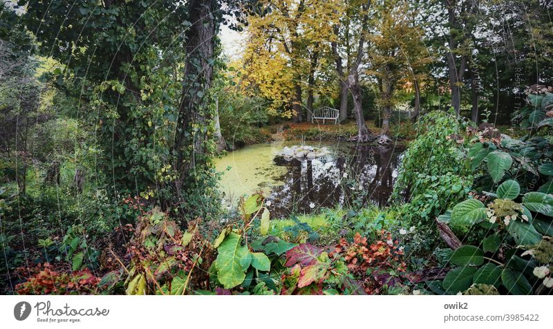 overgrown Panorama (View) Long shot Low-key Shadow Copy Space left Copy Space right Deserted Exterior shot Colour photo Surface of water Autumn Water Plant