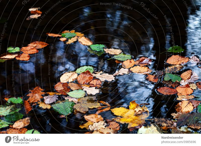 Colorful autumn leaves on a water surface foliage Water Autumn Lake Brook leaf fall Leaf Still Life pond Pond Body of water variegated Autumn leaves