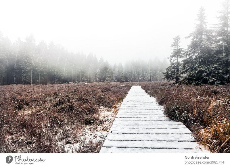 Schützenbergmoor in the Thuringian Forest with first snow and fog Schutzbergmoor Bog Marsh Fog path Footbridge hiking trail forest Snow Winter reserve